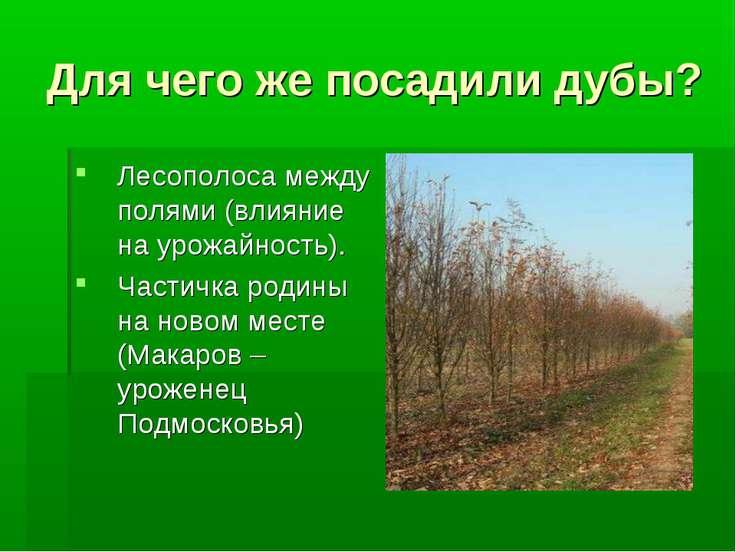 Для чего же посадили дубы? Лесополоса между полями (влияние на урожайность). ...