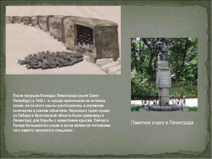 После прорыва блокады Ленинграда (ныне Санкт-Петербург) в 1943 г. в городе пр...