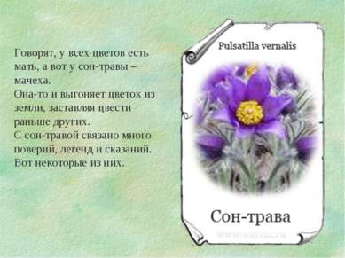 Говорят, у всех цветов есть мать, а вот у сон-травы – мачеха. Она-то и выгоня...