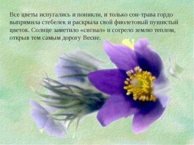 Все цветы испугались и поникли, и только сон-трава гордо выпрямила стебелек и...