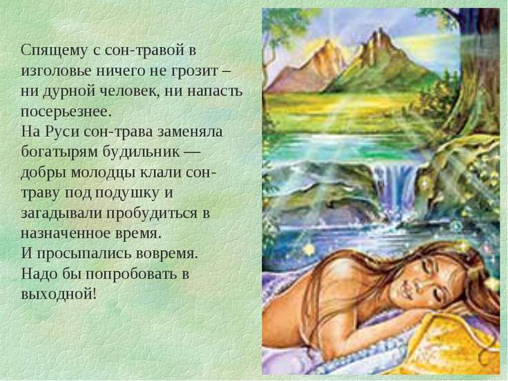 Спящему с сон-травой в изголовье ничего не грозит – ни дурной человек, ни нап...
