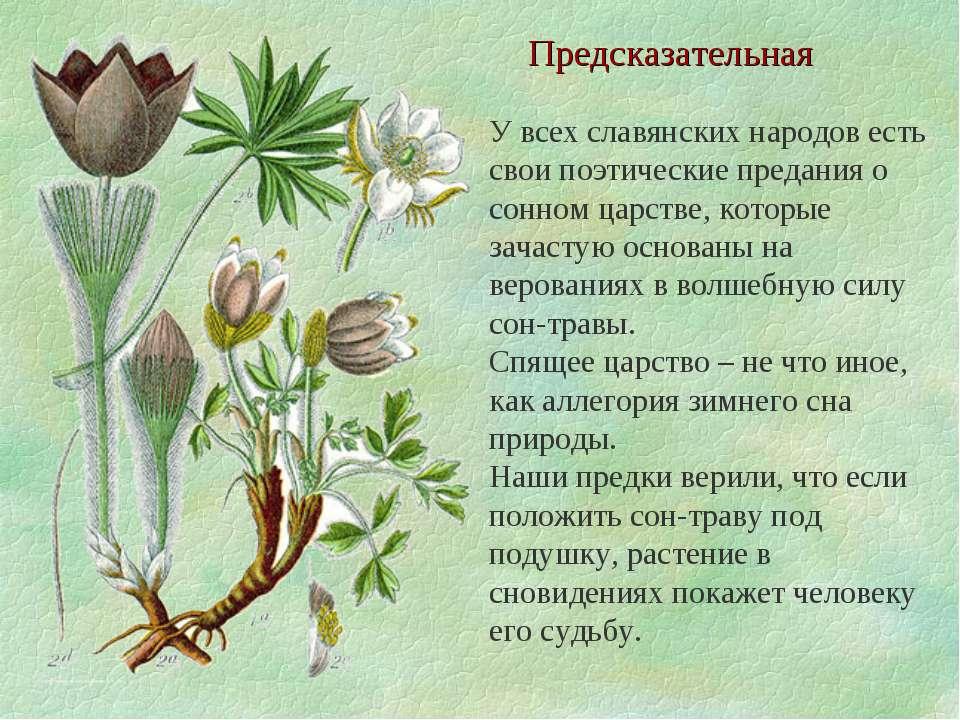 Предсказательная У всех славянских народов есть свои поэтические предания о с...