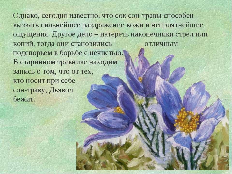 Однако, сегодня известно, что сок сон-травы способен вызвать сильнейшее раздр...