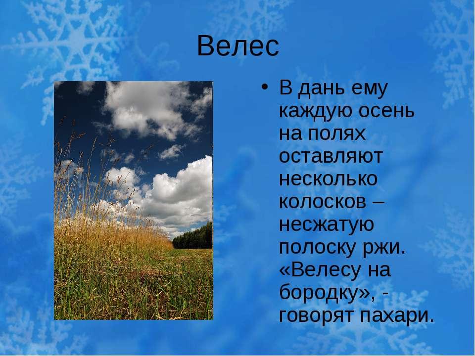 Велес В дань ему каждую осень на полях оставляют несколько колосков – несжату...