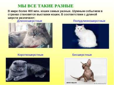 МЫ ВСЕ ТАКИЕ РАЗНЫЕ В мире более 400 млн. кошек самых разных. Шумным событием...