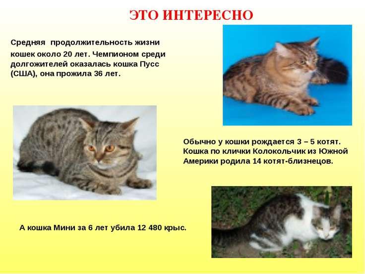 ЭТО ИНТЕРЕСНО Средняя продолжительность жизни кошек около 20 лет. Чемпионом с...