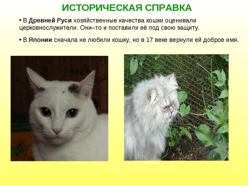 ИСТОРИЧЕСКАЯ СПРАВКА В Древней Руси хозяйственные качества кошки оценивали це...