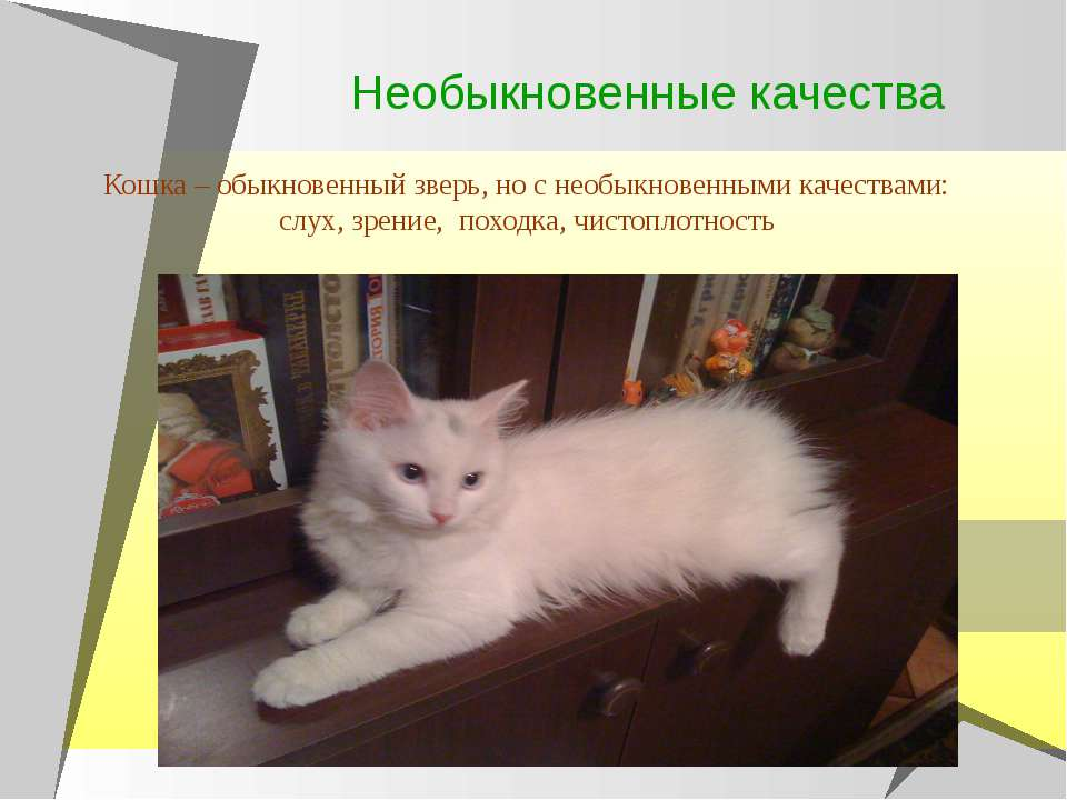 Необыкновенные качества Кошка – обыкновенный зверь, но с необыкновенными каче...