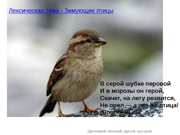 Драчливый, веселый, удалой, шустрый Лексическая тема - Зимующие птицы В серой...