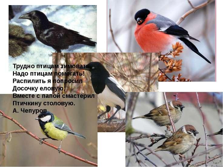 Трудно птицам зимовать, Надо птицам помогать! Распилить я попросил Досочку ел...