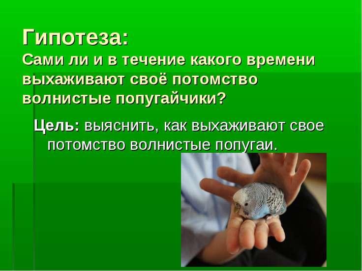 Гипотеза: Cами ли и в течение какого времени выхаживают своё потомство волнис...