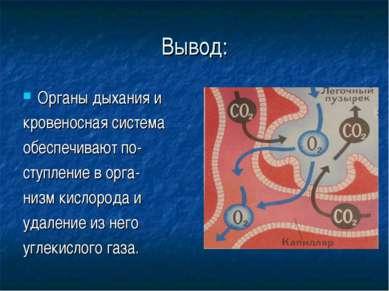 Вывод: Органы дыхания и кровеносная система обеспечивают по- ступление в орга...