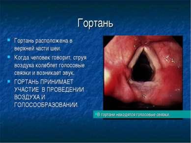 Гортань Гортань расположена в верхней части шеи. Когда человек говорит, струя...