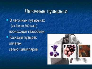 Легочные пузырьки В легочных пузырьках (их более 300 млн.) происходит газообм...