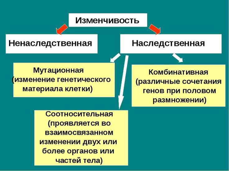 Изменчивость Ненаследственная Наследственная Мутационная (изменение генетичес...