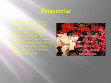 Poinsettias Poinsettias are believed to have originated in central and south ...