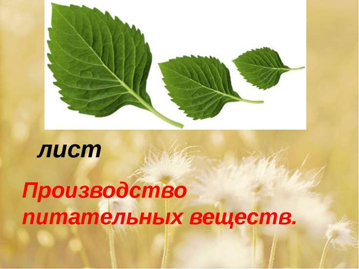 лист Производство питательных веществ.