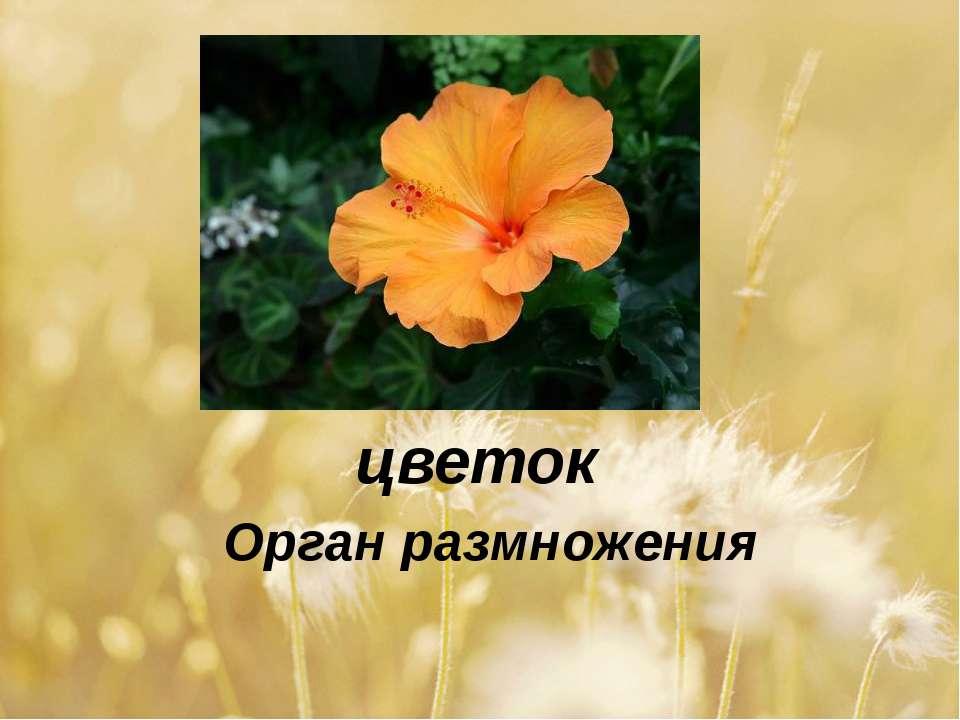 цветок Орган размножения