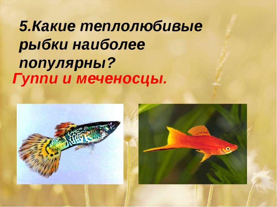 5.Какие теплолюбивые рыбки наиболее популярны? Гуппи и меченосцы.