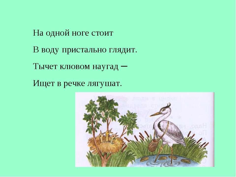 На одной ноге стоит В воду пристально глядит. Тычет клювом наугад ─ Ищет в ре...