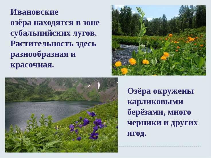 Ивановские озёранаходятся в зоне субальпийских лугов. Растительность здесь р...