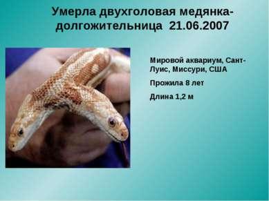 Умерла двухголовая медянка-долгожительница 21.06.2007 Мировой аквариум, Сант-...