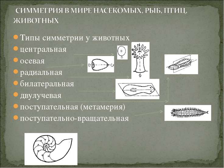 Типы симметрии у животных центральная осевая радиальная билатеральная двулуче...