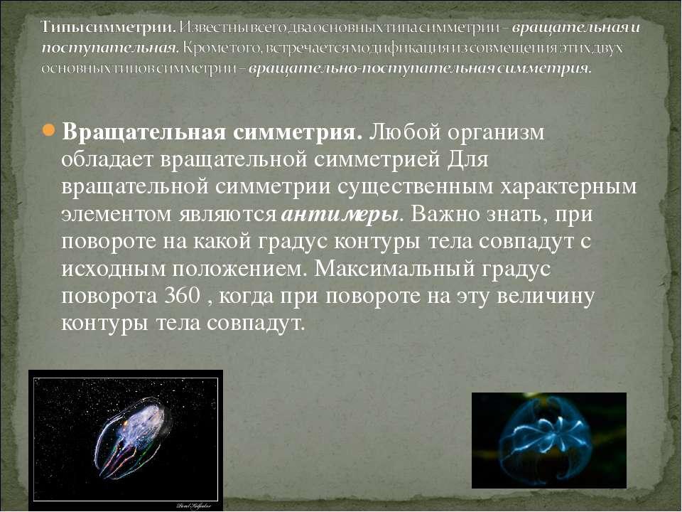 Вращательная симметрия. Любой организм обладает вращательной симметрией Для в...