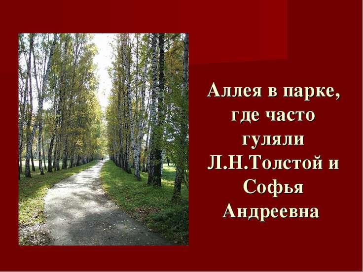 Аллея в парке, где часто гуляли Л.Н.Толстой и Софья Андреевна