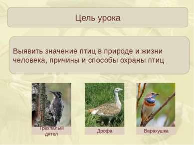 Цель урока Выявить значение птиц в природе и жизни человека, причины и способ...