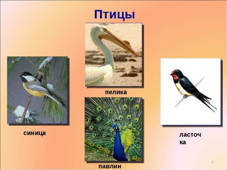 Птицы * пеликан синица павлин ласточка