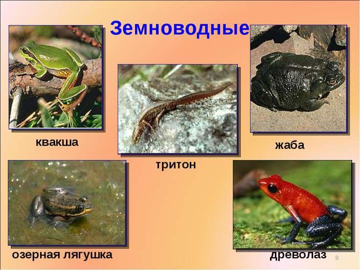 Земноводные квакша древолаз жаба тритон озерная лягушка *