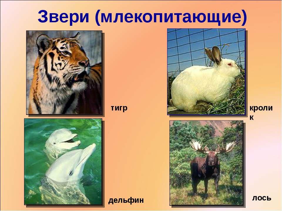 Звери (млекопитающие) тигр кролик дельфин лось *