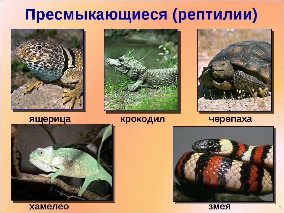Пресмыкающиеся (рептилии) ящерица черепаха крокодил хамелеон змея *