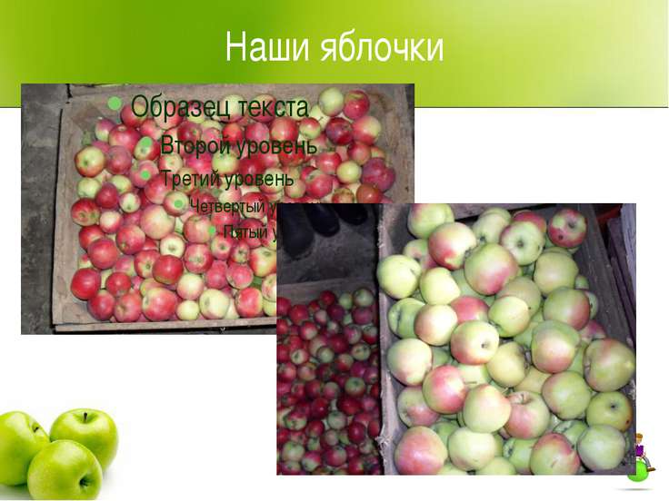 Наши яблочки