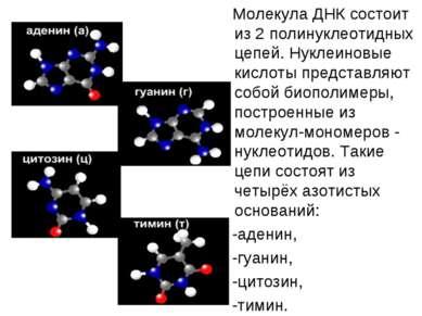 Молекула ДНК состоит из 2 полинуклеотидных цепей. Нуклеиновые кислоты предста...