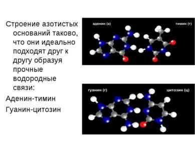 Строение азотистых оснований таково, что они идеально подходят друг к другу о...