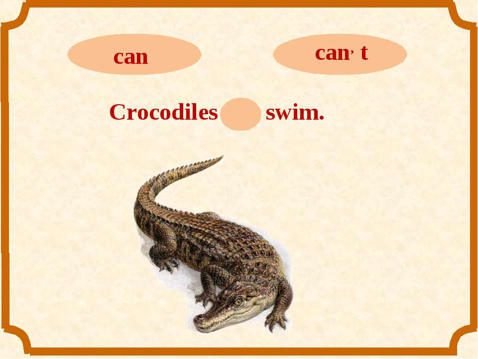 Crocodiles can swim.