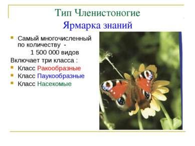 Тип Членистоногие Ярмарка знаний Самый многочисленный по количеству - 1 500 0...