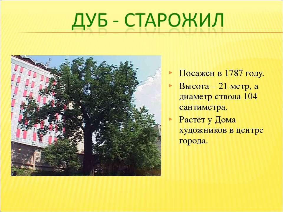 Посажен в 1787 году. Высота – 21 метр, а диаметр ствола 104 сантиметра. Растё...