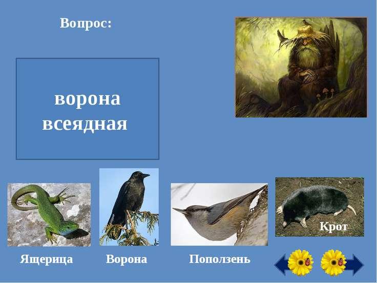 Вопрос: Все ли здесь животные насекомоядные? ворона всеядная Ворона Ящерица П...