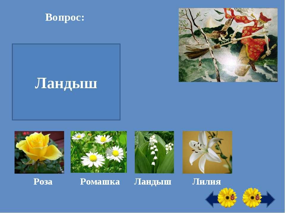 Первый весенний цветок это … Ландыш Вопрос: Роза Ромашка Ландыш Лилия