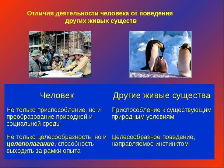 Отличия деятельности человека от поведения других живых существ Человек Други...