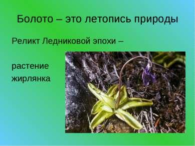 Болото – это летопись природы Реликт Ледниковой эпохи – растение жирлянка