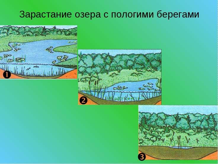Зарастание озера с пологими берегами