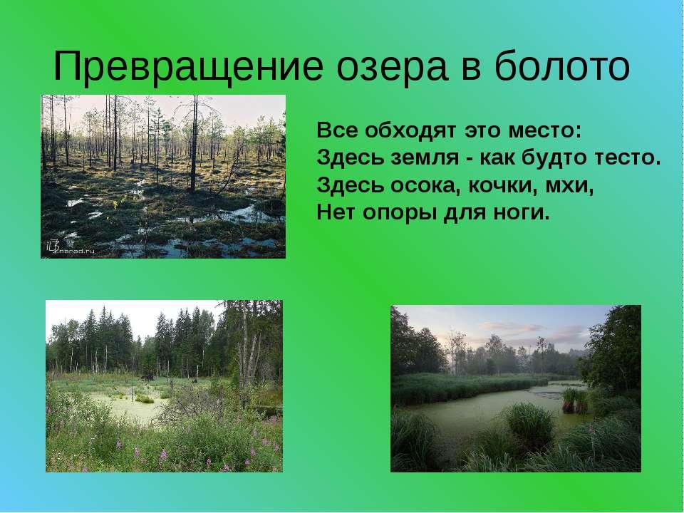 Превращение озера в болото Все обходят это место: Здесь земля - как будто тес...