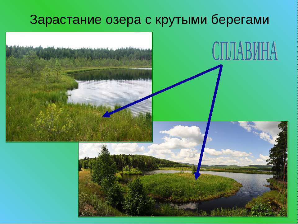 Зарастание озера с крутыми берегами