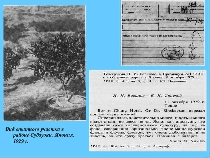 Вид опытного участка в районе Судзуоки. Япония. 1929 г.
