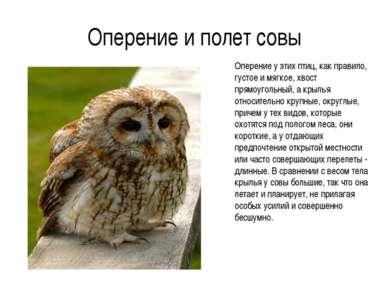 Оперение и полет совы Оперение у этих птиц, как правило, густое и мягкое, хво...