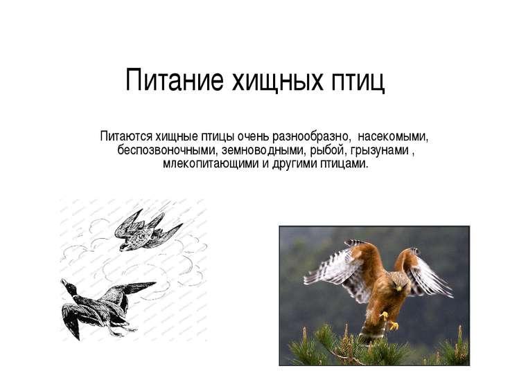 Питание хищных птиц Питаются хищные птицы очень разнообразно, насекомыми, бес...